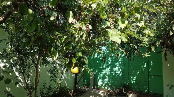 №477 Продается дом-усадьба в живописном месте Крыма